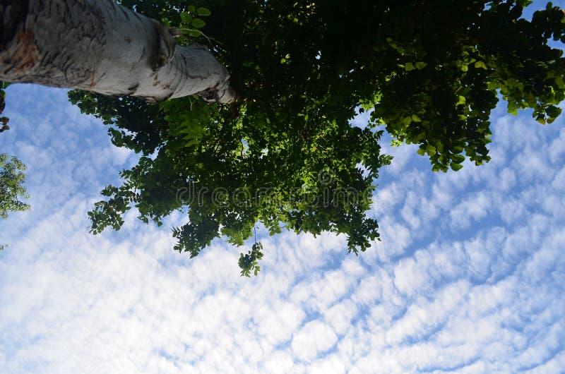 Unter Baum stockbilder