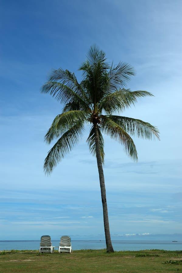 Unter dem Baum stockfoto