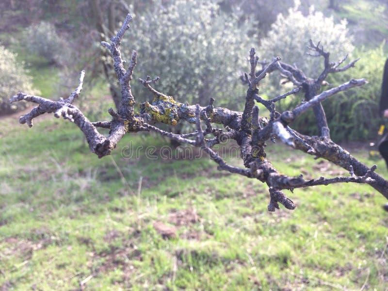 Unter dem Baum-Zweig lizenzfreies stockfoto