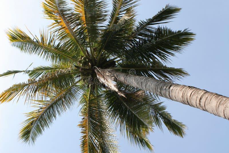 Unter dem Kokosnuss-Baum stockfotografie