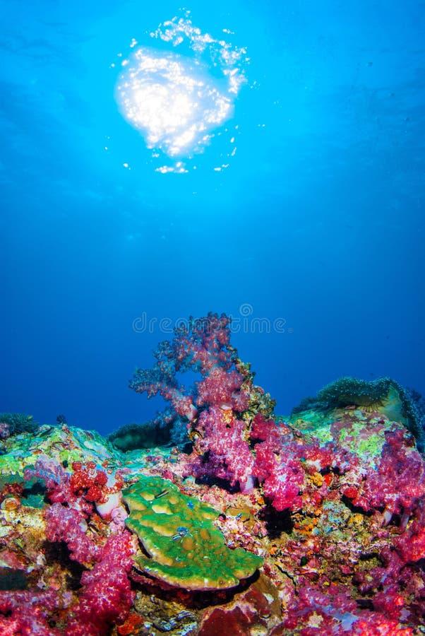 Unter dem Meer bei Similan, Nord-Andaman-Meer Thailand stockfoto