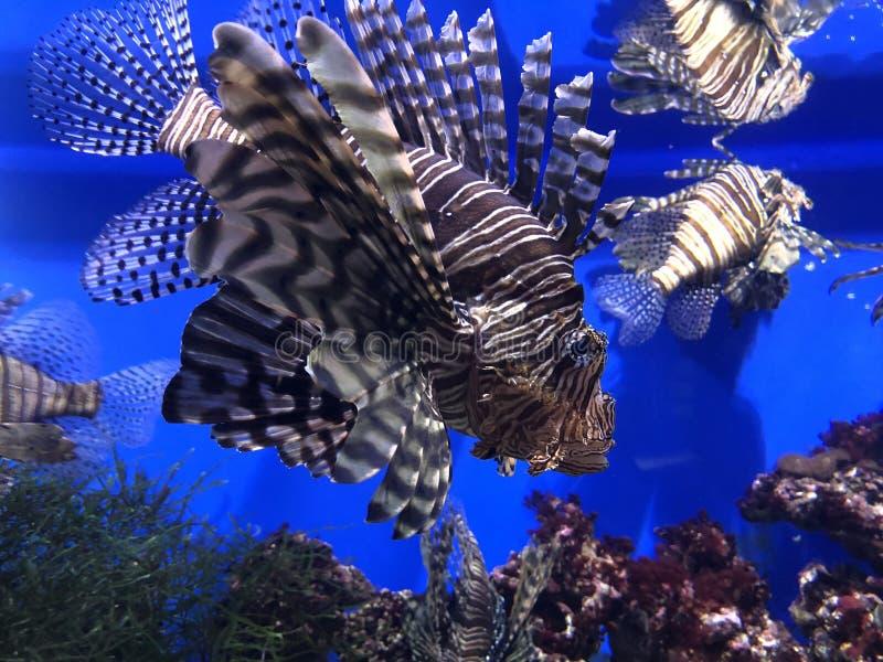 Unter dem Meerwasser lizenzfreie stockfotos
