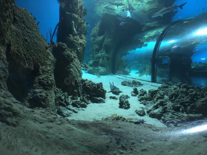 Unter dem Meerwasser stockbild