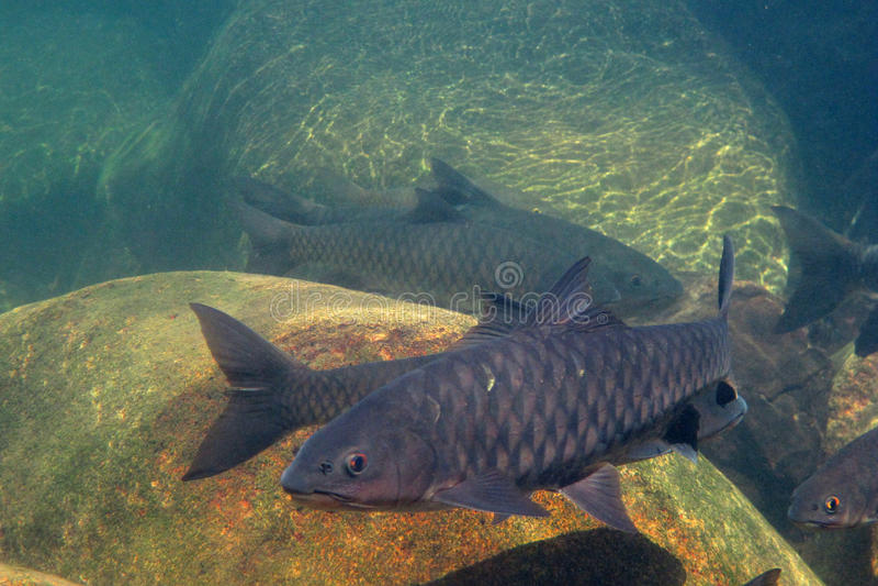 Unter dem Wasserfall und den großen Fischen stockfotos