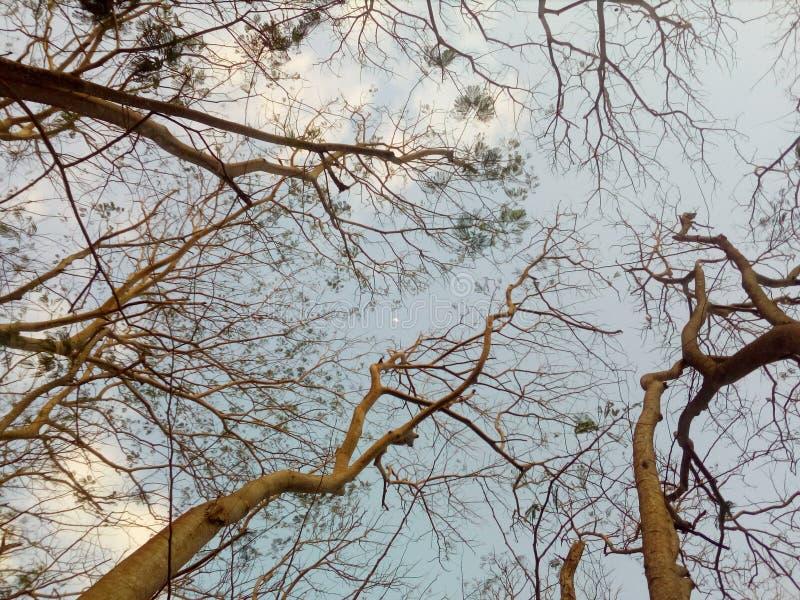 Unter den Bäumen stockfotos