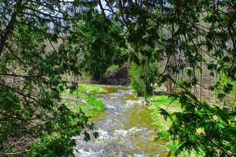 Unter den Bäumen sehe ich einen Fluss lizenzfreie stockfotografie