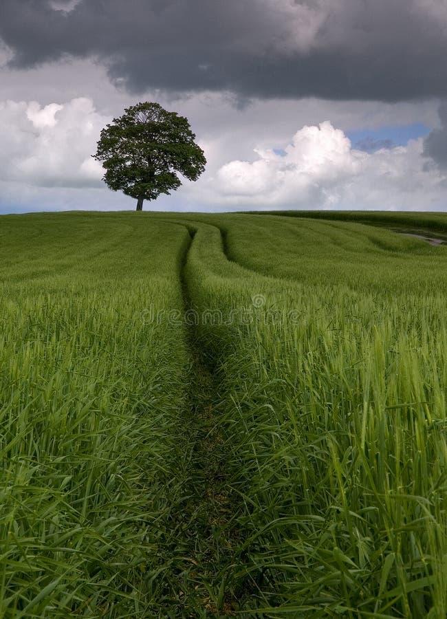 Unter den Feldern der Gerste lizenzfreie stockfotografie