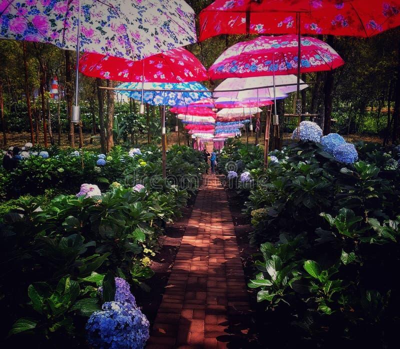 Unter den Regenschirmen stockbilder