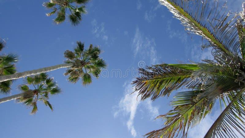 Unter Palmen und blauem Himmel lizenzfreies stockbild