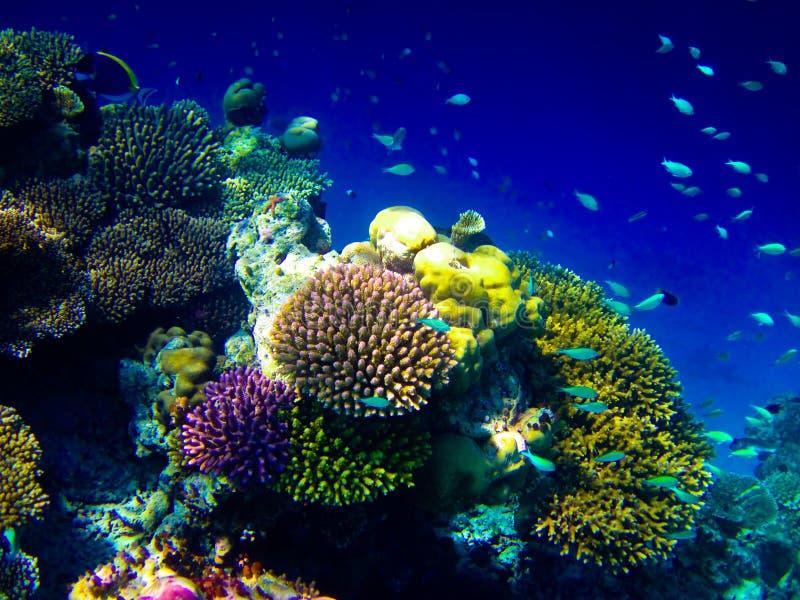 Unter Wasserwelt bei Maldives lizenzfreie stockfotos