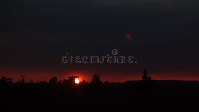 Untergehende Sonne im Wald lizenzfreies stockbild