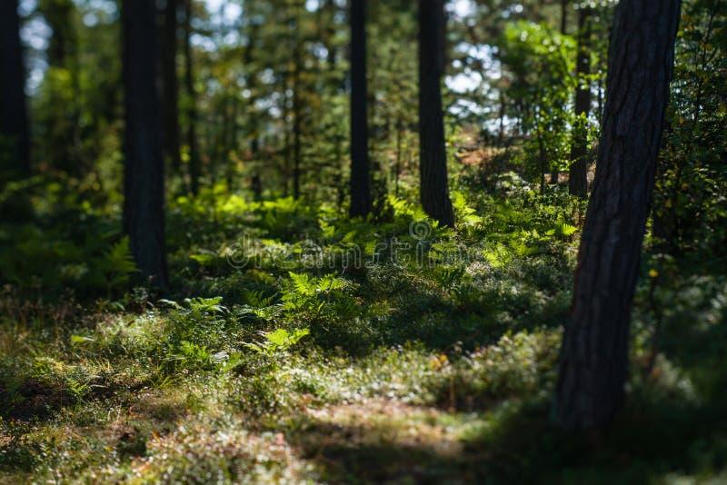 Unterholz stockfotos