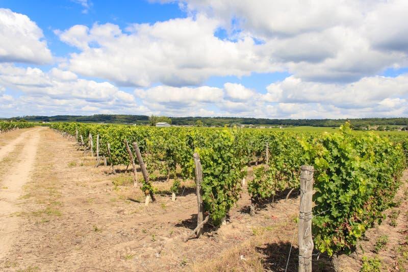 Unterlassung eines Weinbergs und des Himmels lizenzfreies stockfoto