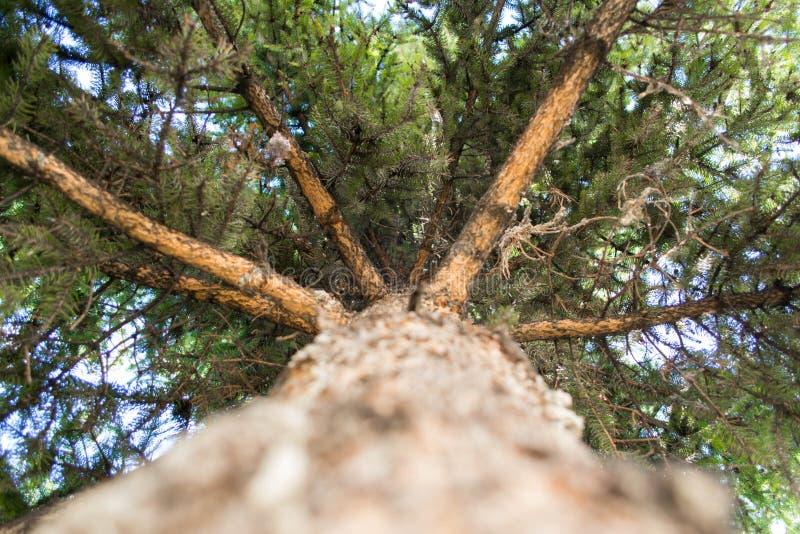 Unterschiedliche Ansicht des Baums lizenzfreie stockfotos