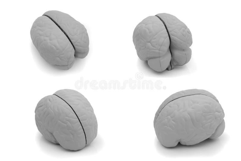 Unterschiedliche Ansicht vier eines vorbildlichen Gehirns lizenzfreies stockbild