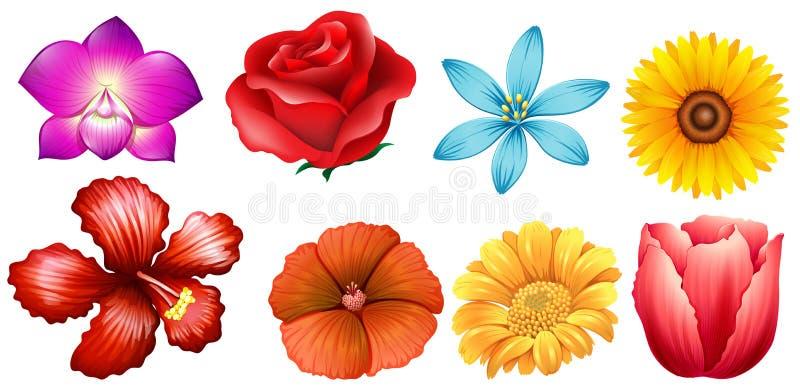 Unterschiedliche Art von Blumen lizenzfreie abbildung