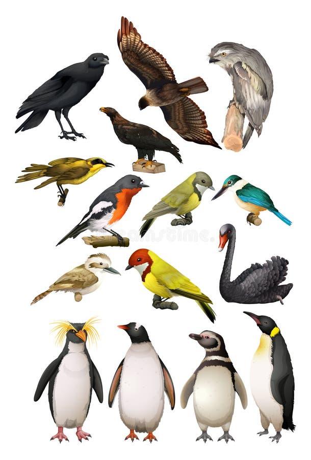 Unterschiedliche Art von Vögeln vektor abbildung