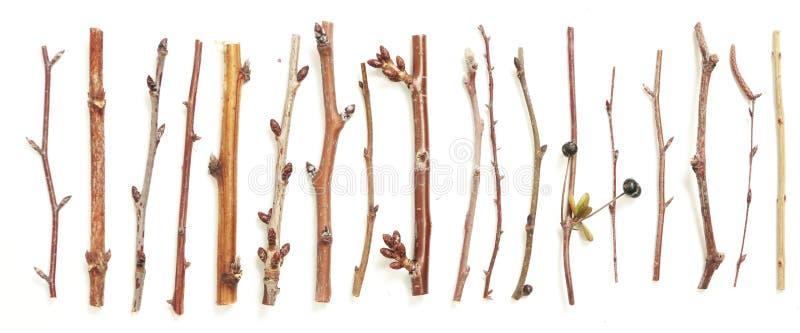 Unterschiedliche Art von Zweigen stockfoto