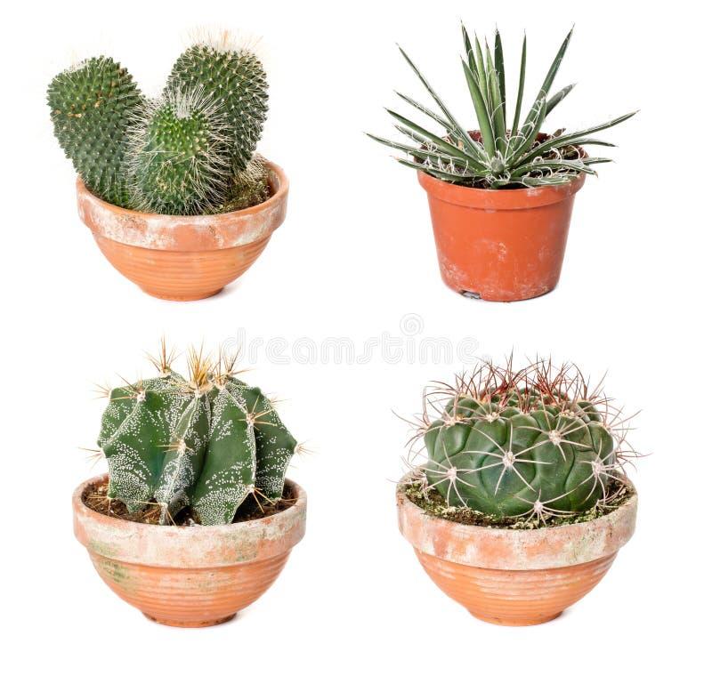 Unterschiedliche Kakteen und Agave in den Flowerpots stockbilder