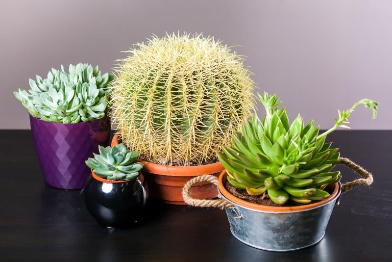 Unterschiedlicher Kaktus vier lizenzfreie stockbilder
