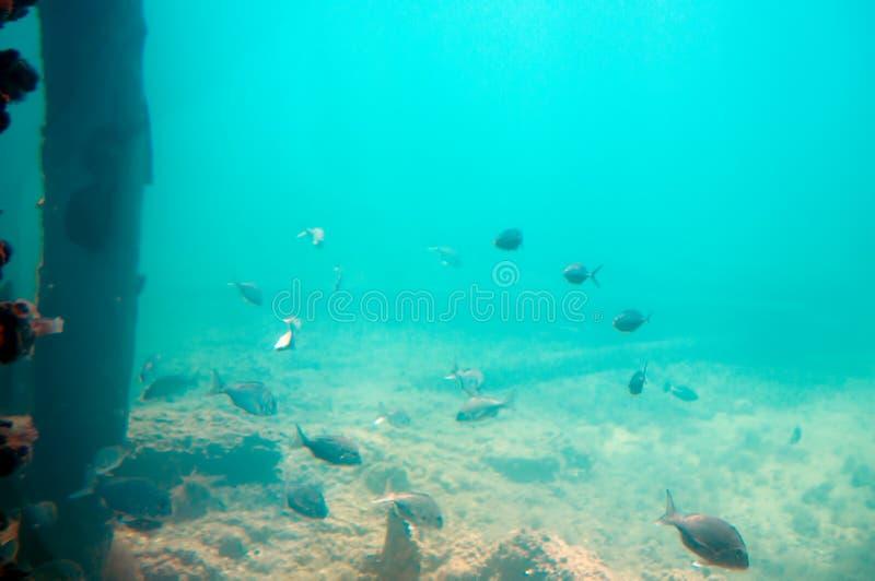 Unterseeische Landschaft gesehen vom Unterwasserobservatorium, Busselton-Anlegestelle, WA, Australien lizenzfreie stockfotografie