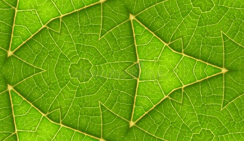 Unterseite grünes Blatt-des nahtlosen Fliesen-Hintergrundes lizenzfreies stockbild
