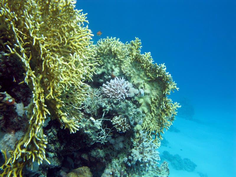 unterseite von tropischem meer mit buntem korallenriff
