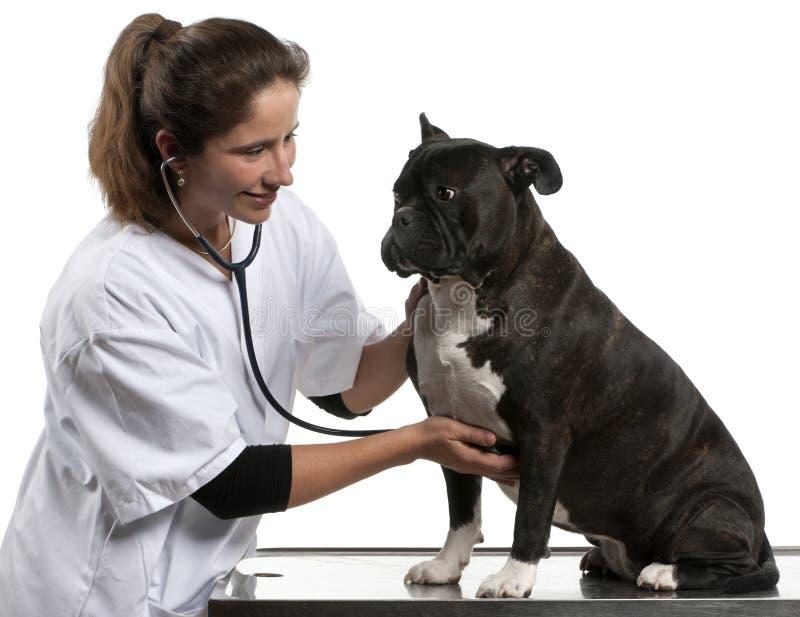Untersuchen Sie die Untersuchung eines Kreuzunghundes stockbild