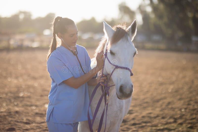 Untersuchungspferd des weiblichen Tierarztes stockfoto
