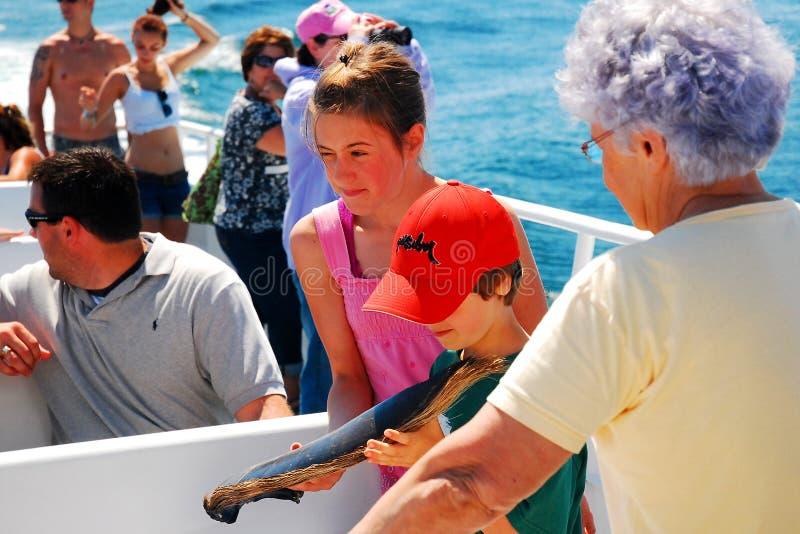 Untersuchungswal Baleen auf einer Wal-aufpassenden Kreuzfahrt lizenzfreies stockbild