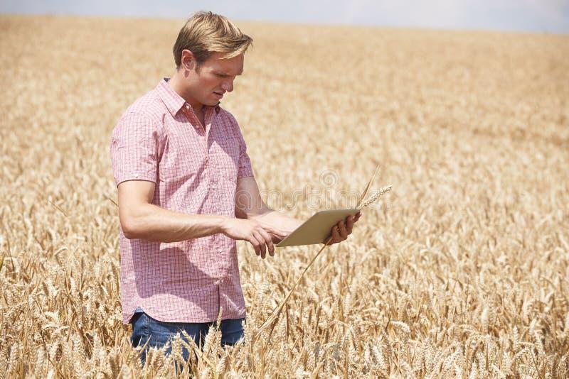 Untersuchungsweizen-Ernte Landwirt-With Digital Tablets auf dem Gebiet lizenzfreies stockbild
