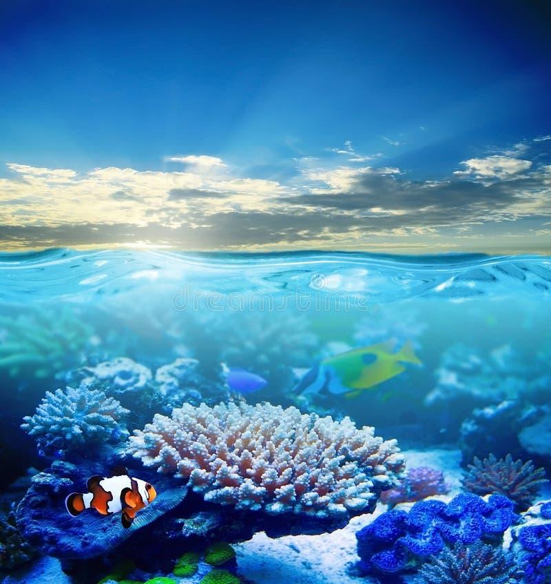 Download Unterwasser stockbild. Bild von frech, leben, tier, schön - 27727957