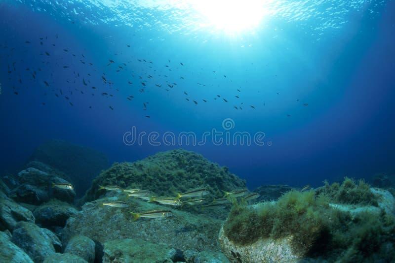Unterwasser stockbild
