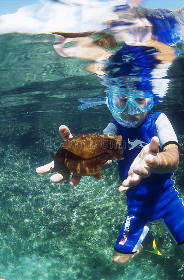 Unterwasser lizenzfreie stockfotos