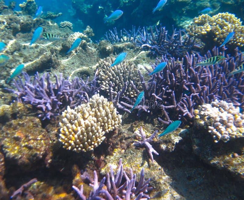 Unterwasser-Coral Garden u. tropische Fische stockfoto