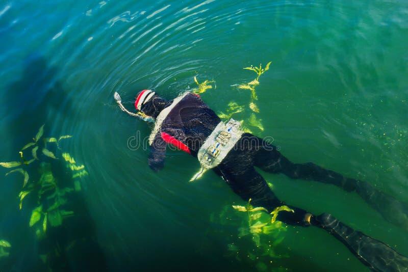 Unterwasser- Jagd auf dem ` Uvildy-` See in den Süd-Urals lizenzfreie stockfotografie