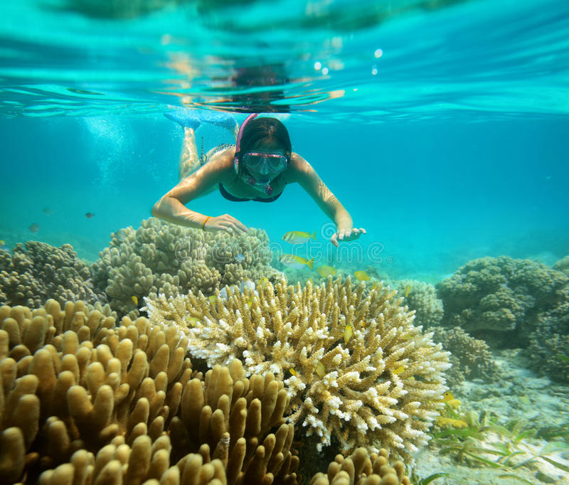 Unterwasserabenteuer eines Mädchens im tropischen Meer lizenzfreie stockfotos