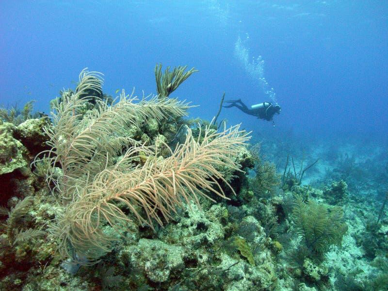 Unterwasseratemgerät Bahamas stockbilder