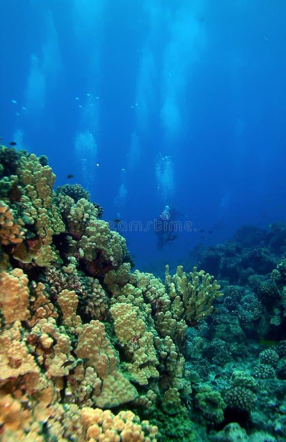 Unterwasseratemgerät-Taucher, die in Richtung zum Riff schwimmen lizenzfreies stockfoto