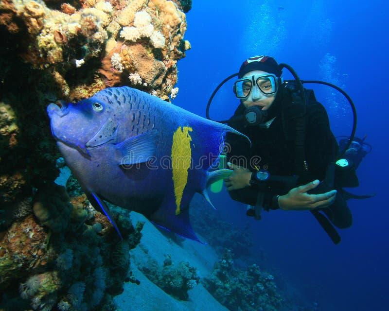 Unterwasseratemgerät-Taucher und Angelfish stockfotos