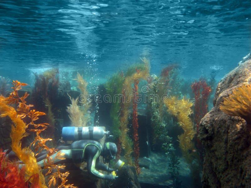 Unterwasseratemgerät-Taucher Unterwasser lizenzfreies stockbild