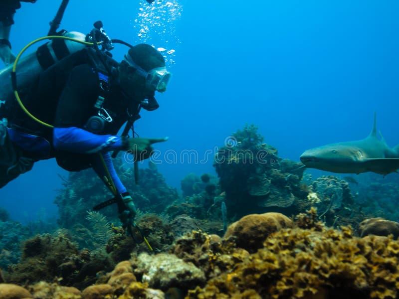 Unterwasseratemgerättaucher und Krankenschwesterhaifisch lizenzfreie stockfotografie