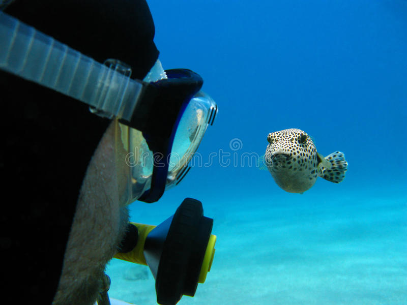 Unterwasseratemgerättaucher und pufferfish lizenzfreie stockbilder