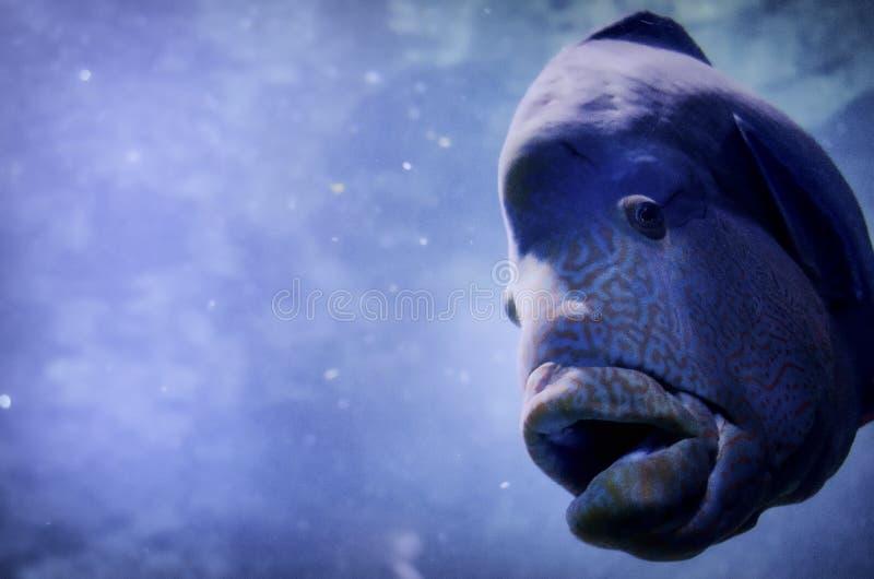 Unterwasserfische der wild lebenden Tiere stockbilder