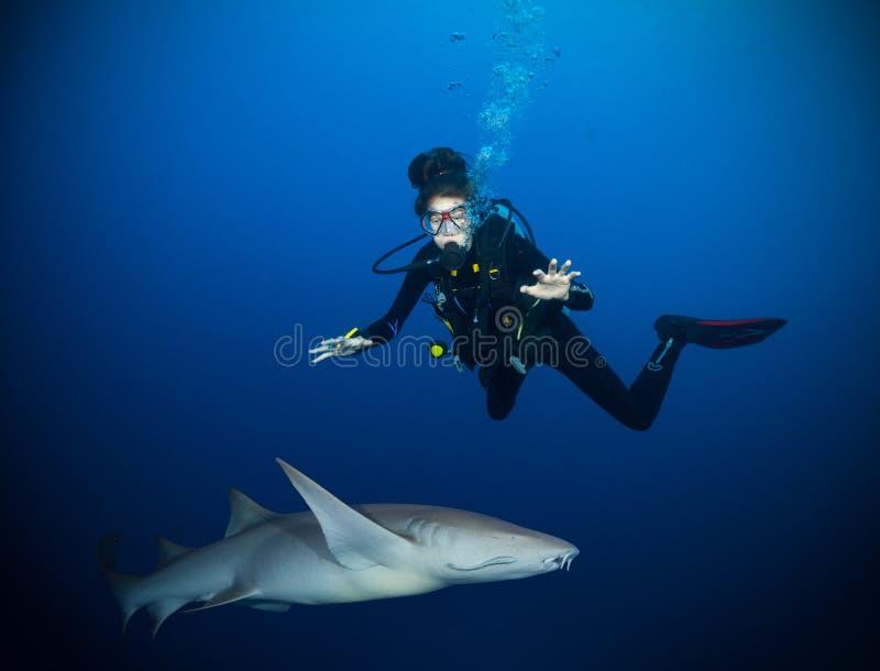Unterwasserfoto des Frauentauchers mit Haifisch stockfoto