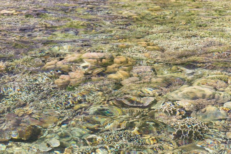 Unterwasserkorallen Olorful Korallen unter Oberfläche Ozeannatur Lagunenwild lebende tiere Unterseeischer Hintergrund lizenzfreie stockfotos