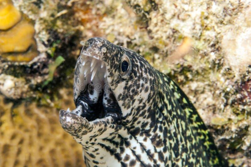 Unterwasserkorallenriff lizenzfreies stockfoto