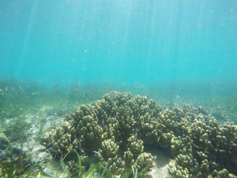 Unterwasserkorallenriffhintergrund in Bali lizenzfreie stockbilder