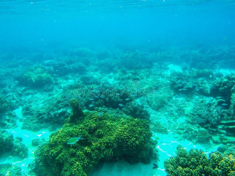 Unterwasserlandschaft mit Korallenriff und blauen korallenroten Fischen Tropische Seelagune mit Seetieren lizenzfreie stockfotografie