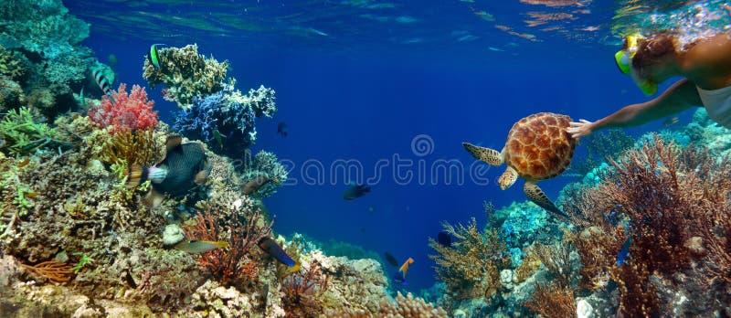 Unterwasserpanorama in einem Korallenriff mit buntem sealife stockfoto